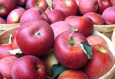 Melicks Cider Mill and Orchard